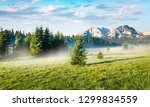 little fir trees come from the... | Shutterstock . vector #1299834559
