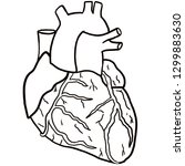 anatomical heart isolated on... | Shutterstock . vector #1299883630