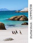 four little penguins on... | Shutterstock . vector #129992558
