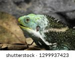 close up of a beautiful green...   Shutterstock . vector #1299937423