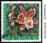 "Small photo of POLAND - CIRCA 1968: A stamp printed in Poland shows Flower Odontonia, with the same inscription, from the series ""Exotic Flowers"", circa 1968"