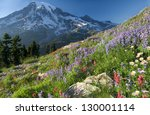 Mount Rainier Wildlflowers See...