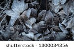 ice frosted winter leaves... | Shutterstock . vector #1300034356