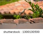 a picturesque gray bird with... | Shutterstock . vector #1300130500