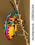 Close up of jewel bug in the...