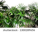 palm leaves on a white... | Shutterstock . vector #1300289656