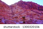 desert nature around saint... | Shutterstock . vector #1300320106