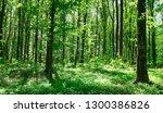 forest trees. nature green wood ... | Shutterstock . vector #1300386826