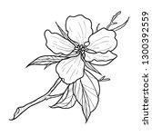 black and white flower... | Shutterstock .eps vector #1300392559