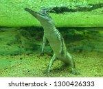 Small Green Crocodile Under...