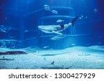 Baby Whale Shark At Osaka...