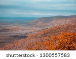 Autumn Colored Leaves On The...