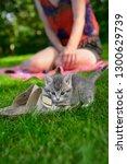 Cautious Female Kitten Outdoors ...