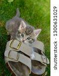 Female Kitten Outdoors...
