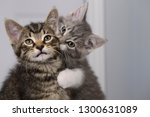 Stock photo sister love biting the neck of brother tabby kitten indoors 1300631089