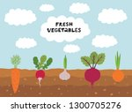 fresh organic vegetable garden... | Shutterstock .eps vector #1300705276