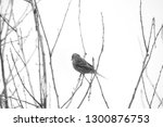 black and white photo of small... | Shutterstock . vector #1300876753