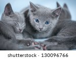 Stock photo sleeping kitten breed russian blue on a blue background 130096766
