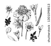 botanical graphic illustration... | Shutterstock . vector #1301098813