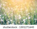 dark grass pasture on sunset...   Shutterstock . vector #1301271640