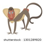 Cartoon Baboon. Vector...