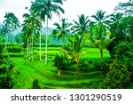 lush green rice terrace field... | Shutterstock . vector #1301290519