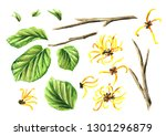 witch hazel elements set with... | Shutterstock . vector #1301296879