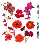 Stock photo set of red color flowers isolated on white background 130132283