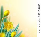 Beautiful narcissus flowers with bokeh. Floral background. - stock photo