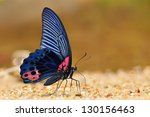 Black And Red Butterfly  Great...