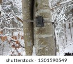 photo traps in forests  camera... | Shutterstock . vector #1301590549