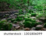 beautiful rainforest and green... | Shutterstock . vector #1301806099