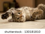 Stock photo cat 130181810