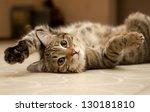 cat | Shutterstock . vector #130181810