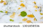 the first snow  late autumn ... | Shutterstock . vector #1301858536