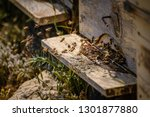 bees flying in front of a... | Shutterstock . vector #1301877880