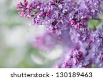 Blooming Lilacs. Wallpapers...