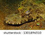 the crocodilefish ... | Shutterstock . vector #1301896510