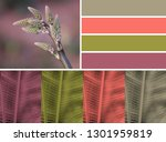 aloe plant with color palette | Shutterstock . vector #1301959819