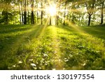 Sunlight In The Green Forest ...