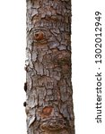 embossed texture of tree bark... | Shutterstock . vector #1302012949