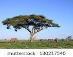 Elephant Family Grazing Under...