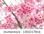beautiful cherry blossoms... | Shutterstock . vector #1302217816