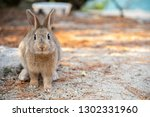 Close Up Brown Rabbit In Sunny...