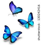 Stock photo three blue butterflies isolated on white 130242416
