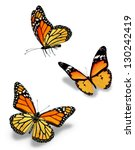 Stock photo three orange butterflies isolated on white 130242419