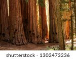 Hiker in Sequoia national park in California, USA - stock photo