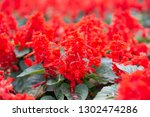 small red and pink flowers ... | Shutterstock . vector #1302474286