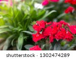small red and pink flowers ... | Shutterstock . vector #1302474289