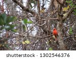 red male northern cardinal... | Shutterstock . vector #1302546376